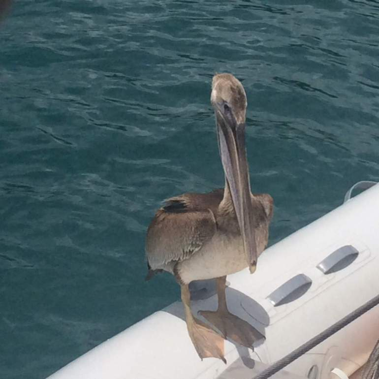 Back in anchor and look who came to see us.